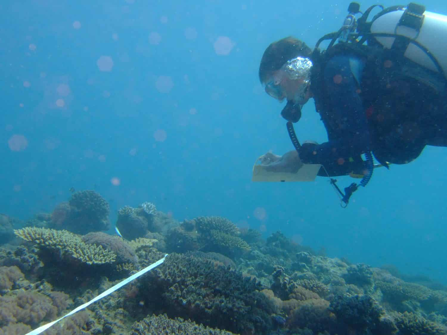 Conducting a reef survey