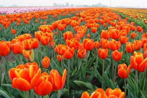 Holland – A Perfect Getaway for European Travellers