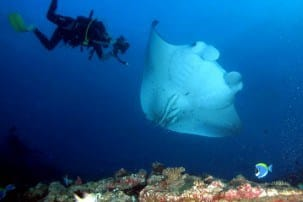 5 best dive sites for seeing Manta Rays and other sea life