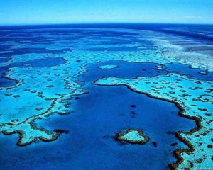 Queensland diving best places to see Manta Ray