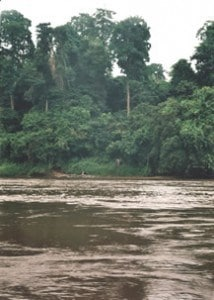 Lope River and Elephant