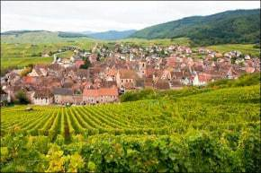 Alsace vinyards and holiday ideas
