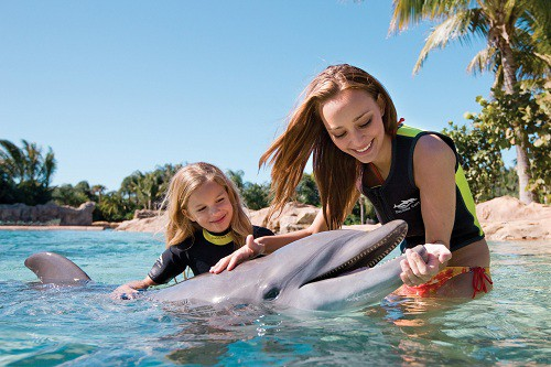 where to swim with dolphins