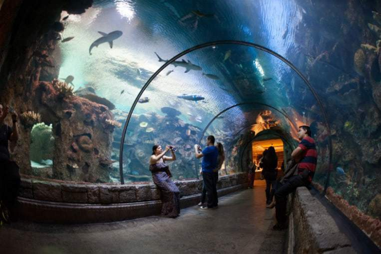 Shark Reef Las Vegas