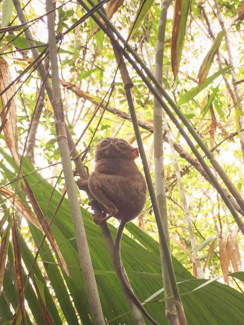 Philippines wildlife