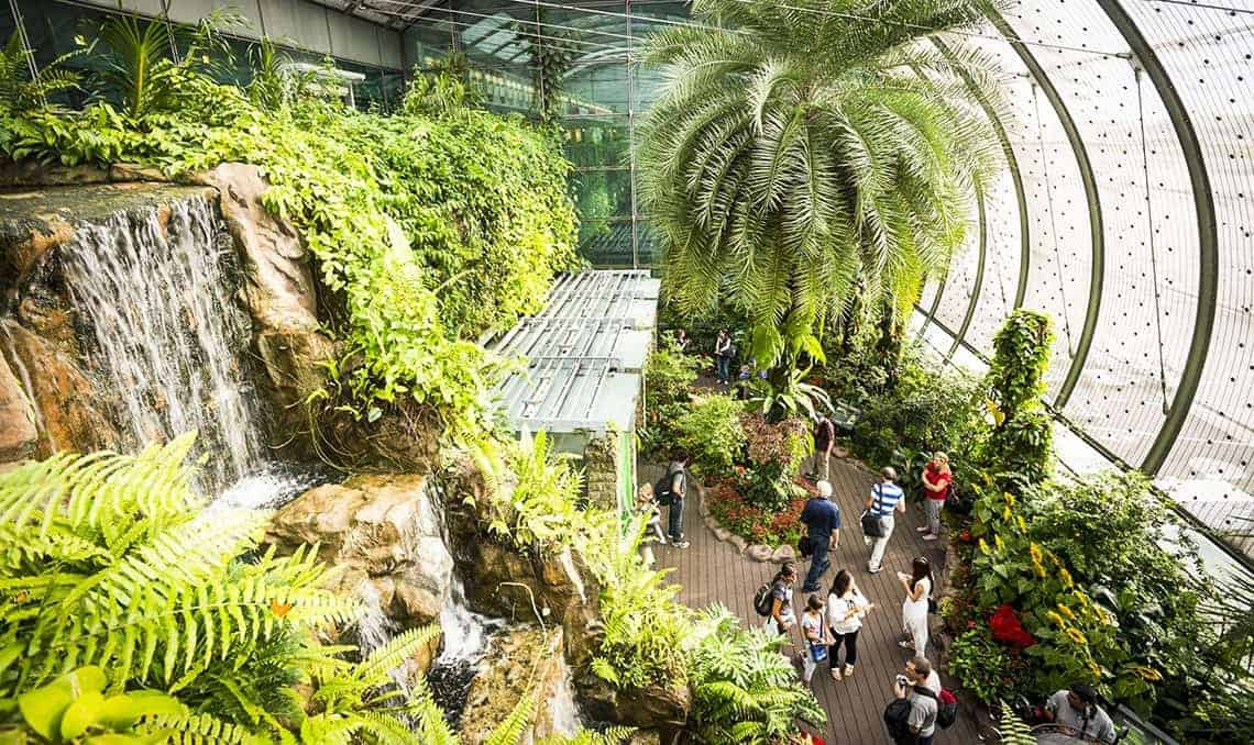 Changi Airport butterfly sanctuary