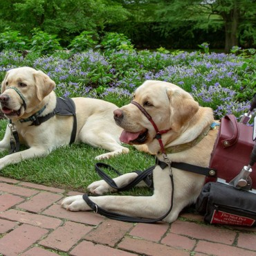 5 Tips for Flying with Your Service Dog