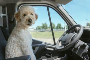 How to plan a road trip with pets