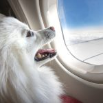 Can You Travel with Your Therapy Dog?